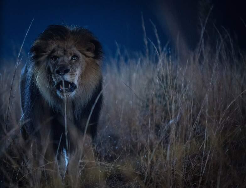 La série Zoo et ses lions enragés qui s'en prennent aux hommes