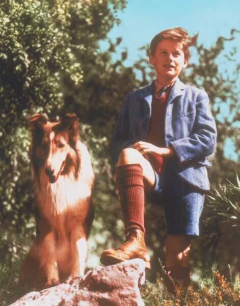 L'inoubliable et fidèle Lassie dans la série éponyme de 1943