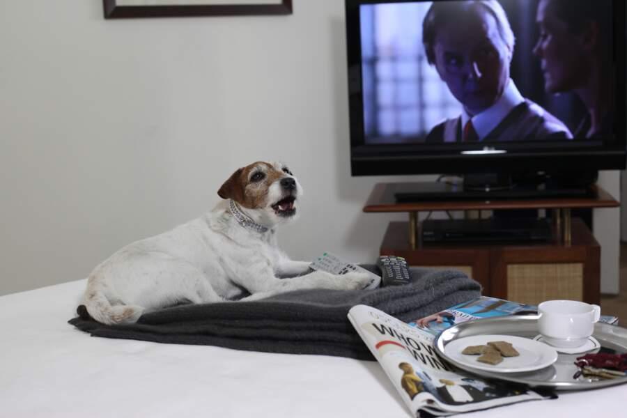Fin de journée tranquille devant la télé pour Uggie