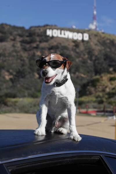 Uggie, chien star de The Artist à la conquête d'Hollywood !