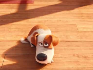 Nemo, Simba, Bambi… Découvrez les animaux les plus mignons des films d'animation