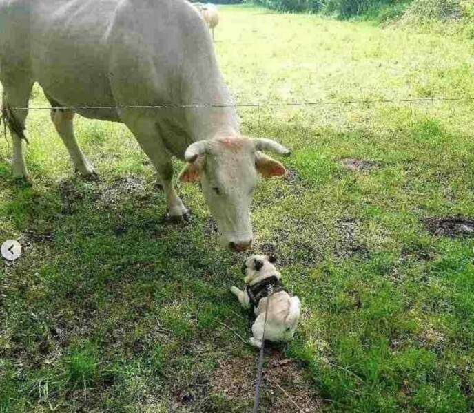 Même McFly, son chien qui la suit partout, s'est fait une copine !